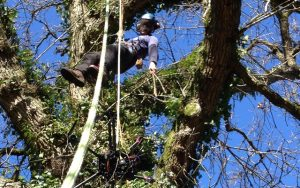 rescuing BBC drone from a tree